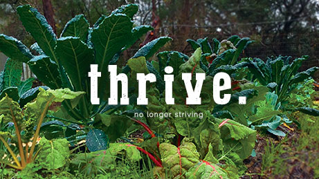thrive_web